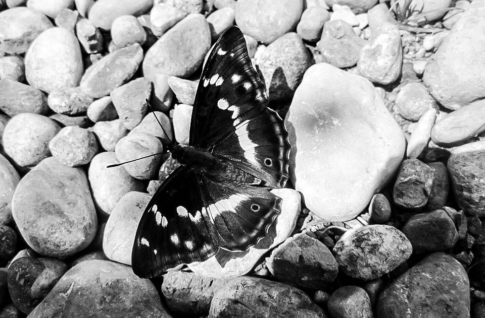 nature-542750_960_720