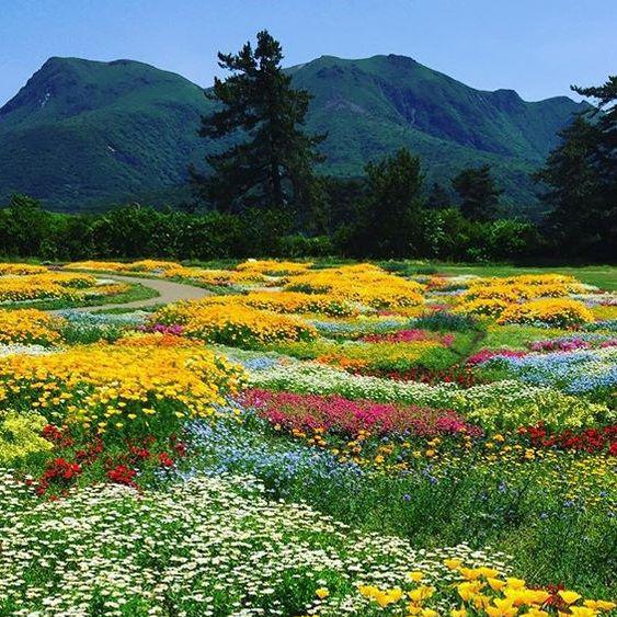 flowers camp